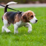 Risarcimento del danno da perdita di animale domestico